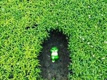青蛙玩偶放松 免版税图库摄影