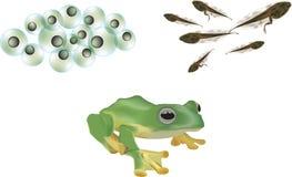 青蛙生存期 免版税库存照片