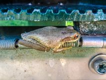 青蛙的侧视图 免版税库存图片