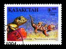 青蛙目的壁虎(Teratoscincus小蜥蜴类),爬行动物serie,大约19 库存图片