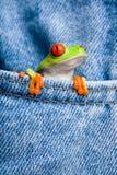 青蛙矿穴 免版税库存照片