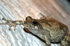 青蛙结构树 免版税库存图片