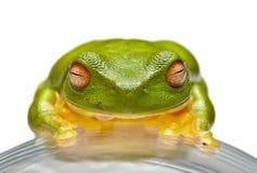 青蛙绿色结构树 库存照片