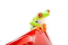 青蛙罐 免版税库存图片