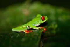 青蛙花里胡哨的叶子 库存图片