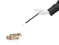 青蛙藏品魔术魔术师鞭子 库存图片