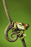 青蛙跳密林准备好对结构树热带枝杈 库存图片