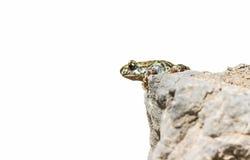 青蛙跳 免版税库存照片