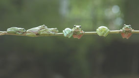 青蛙,动物, 免版税库存图片