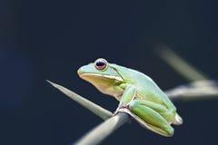 青蛙,动物, 免版税图库摄影