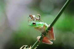 青蛙,动物, m, antis, 免版税库存照片