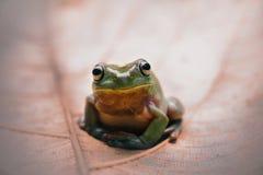 青蛙,动物, m, antis, 库存图片