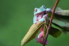 青蛙,矮胖的青蛙,动物,爬行动物,野生生物,自然, 库存照片