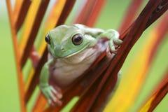 青蛙,雨蛙,动物,哺乳动物,友谊, 图库摄影