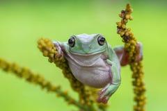 青蛙,雨蛙,动物,哺乳动物,友谊, 免版税库存照片