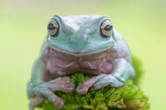 青蛙,雨蛙,蜗牛,动物,哺乳动物,友谊, 免版税库存图片