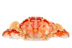 青蟹,隔绝在白色背景 库存图片