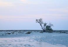静止和孑然-与唯一树、岩石地球和清楚的天空的风景-简单派-水缺乏 免版税库存图片