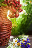 静物画。 成熟野草莓和野花 免版税库存照片