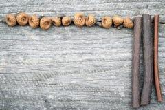 静物画与微小的橡子的构成框架老木表面上 免版税库存照片