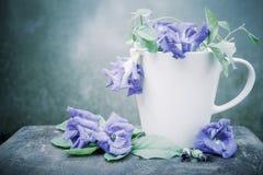 静物画蓝色豌豆或蝴蝶豌豆在咖啡杯在木头 免版税库存照片