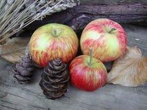 静物画、苹果和杉木锥体 库存照片