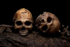 静物画与两块人的头骨的绘画摄影 免版税库存图片