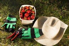 静物画在一个庭院里用草莓 免版税库存照片