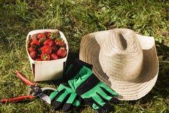 静物画在一个庭院里用草莓 图库摄影