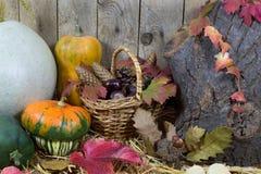 静物画用各种各样的南瓜、柳条筐充满Pinecones,橡子、栗子和秋叶在干草 免版税库存照片