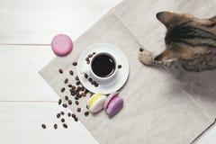 静物画用咖啡、蛋白杏仁饼干和猫 免版税库存图片