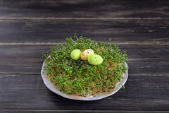 静物画用在一个绿色青苔的鹌鹑蛋 免版税图库摄影