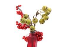 静物画用新鲜的自然红色花楸浆果和小绿色梨在一个色的花瓶 免版税库存图片