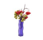 静物画用新鲜的自然红色花楸浆果和小绿色梨在一个色的花瓶 免版税图库摄影