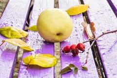 静物画用苹果和秋叶 库存照片