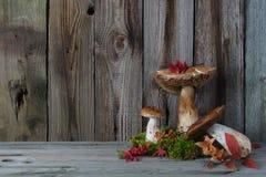 静物画用蘑菇,秋叶青苔 图库摄影