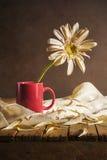 静物画白色大丁草红色杯子 免版税库存图片