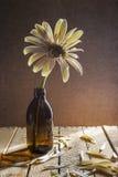 静物画白色大丁草玻璃书 库存图片