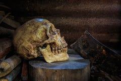 静物画头骨和木柴 免版税库存照片