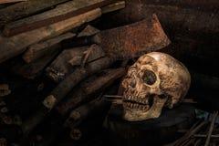 静物画头骨和木柴 免版税图库摄影