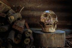静物画头骨和木柴 免版税库存图片