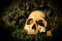 静物画头骨在庭院里 免版税库存图片