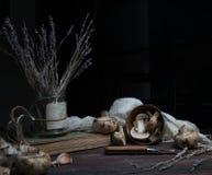 静物画,葡萄酒 蘑菇,在一张黑暗的木桌上的淡紫色 艺术,老绘画 免版税库存图片