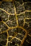 静脉抽象微写器从一片死的叶子的 库存图片
