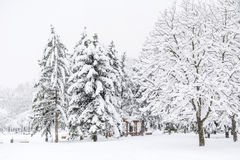 从索非亚,保加利亚的美好的冬天公园风景 库存照片
