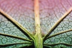 非常一片绿色叶子的极端特写镜头 库存照片