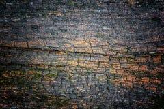 非常与青苔和镇压的老被风化的土气木纹理在t 免版税图库摄影