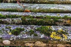 非常与青苔和镇压的老被风化的土气木纹理在t 库存图片
