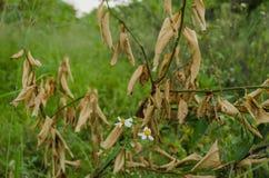非常五颜六色的绿色叶子围拢的干燥叶子,干燥的概念在丰富的生活 免版税库存图片