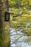 非常在地衣和青苔盖的老嵌套鸟箱子,垂悬在一棵树在春天,用绿色芽在背景中 免版税库存图片